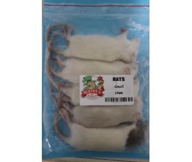 Frozen Rats