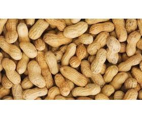 Raw Peanuts (in shell)